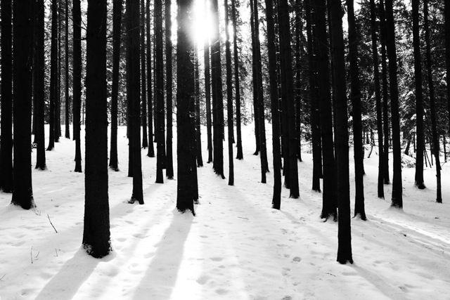 skog1-72dpi